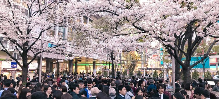 Cherry blossom spots in Tokyo
