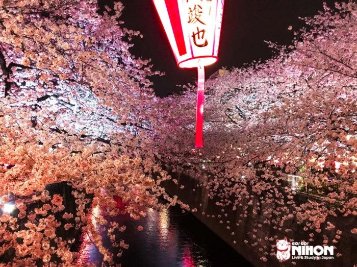 Fiori di ciliegio lungo il fiume Meguro di notte