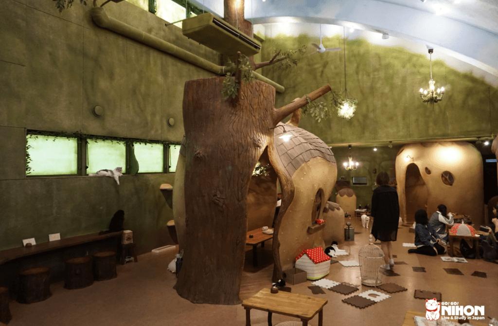 Les cafés animaliers au Japon - Neko Café