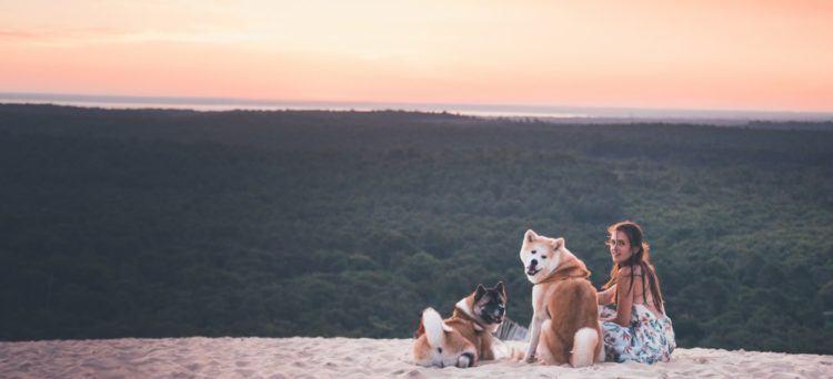 Akita Inu japanese dog sunset sand dune