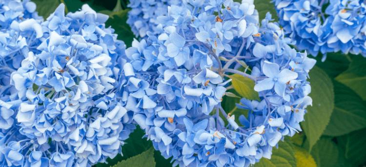 flower festivals around Tokyo