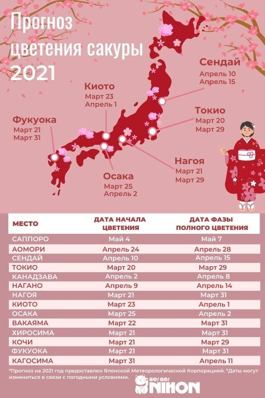 2021 cherry blossom forecast infographic Russian